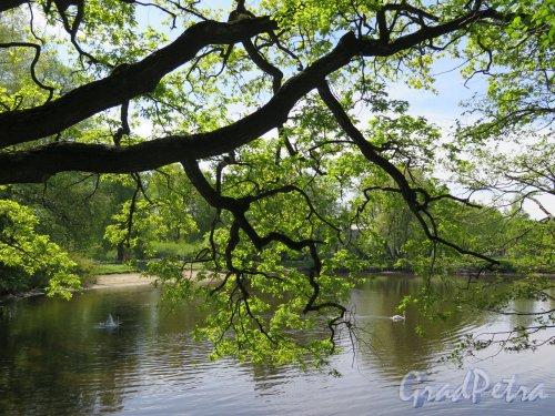 Центральный культуры и отдыха парк (ЦПКиО). 1-й Северный пруд. Общий вид. фото май 2016 г.