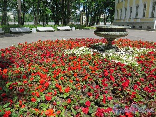 Парк Каменноостровского дворца. Клумба на Дворцовой площадке (Клумба с гранотной вазой). фото июль 2017 г.