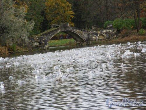 Гатчинский парк (Дворцовый). Белое озеро. Горбатый мостик, 1800-1891, арх. А.Д. Захаров. фото октябрь 2017 г.