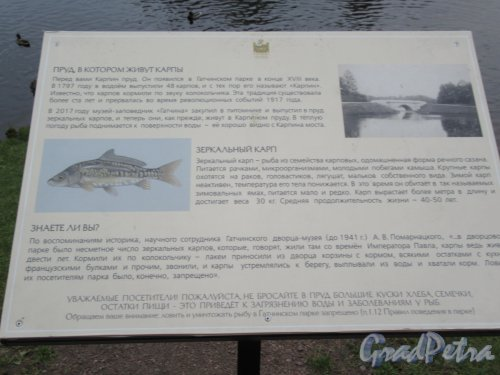 Гатчинский парк (Дворцовый). Карпин пруд. Описание зоосферы. фото октябрь 2017 г.