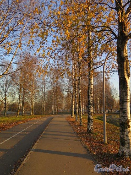 Муринский парк. Велодорожка. фото ноябрь 2017 г.