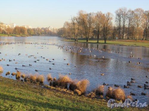 Разлив Муринского ручья в Муринском парке. фото ноябрь 2017 г.