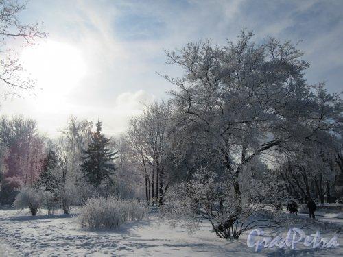 Сад без названия у Ст. метро «Кировский завод» зимой. фото февраль 2018 г.
