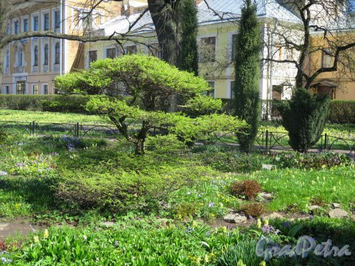Ботанический сад. Аптекарский участок. Общий вид. фото май 2018 г.