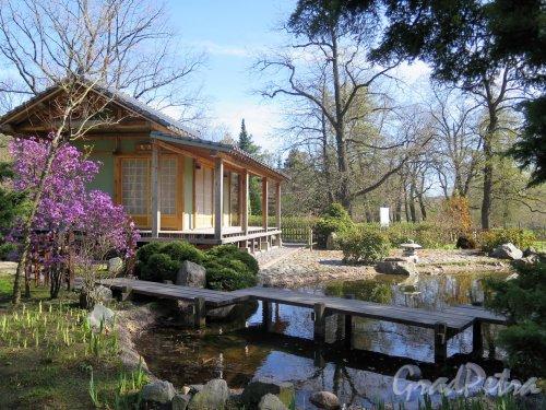 Ботанический сад. Участок Японский садик. Общий вид. фото май 2018 г.