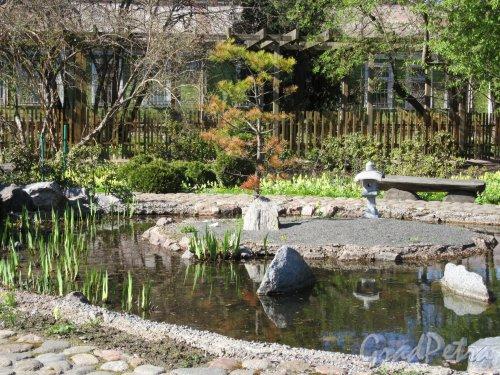 Ботанический сад. Участок Японский садик. Пруд с островком. фото май 2018 г.