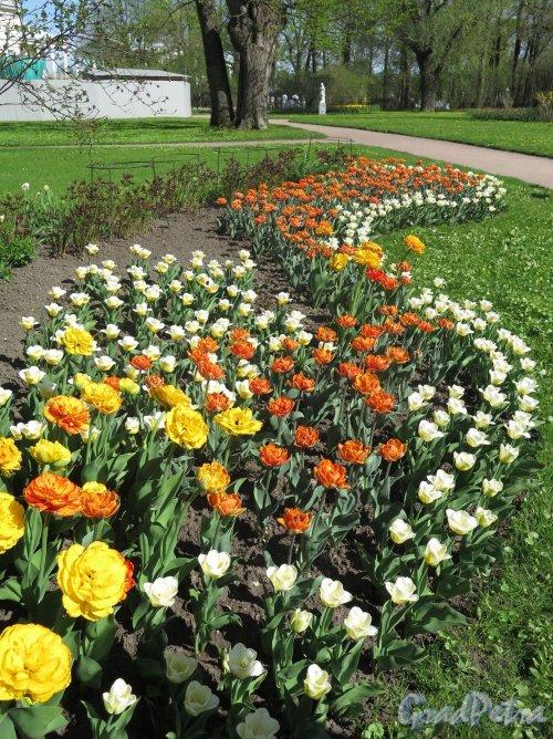 Екатерининский парк (Пушкин). Собственный сад. Оформление клумбы. фото май 2018 г.