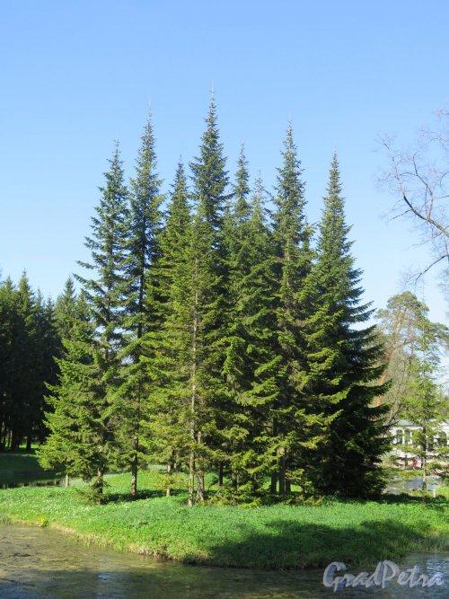 Екатерининский парк (Пушкин). Лебяжий островок на Лебедином пруду. Общий вид. фото май 2018 г.