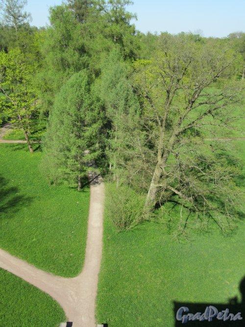 Екатерининский парк (Пушкин). «Башня-руина». Вид парка с обзорной площадки. фото май 2018 г.