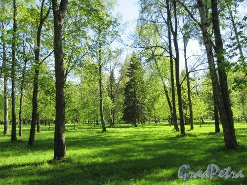 Приморский парк Победы. Вид зеленого участка. фото май 2018 г.