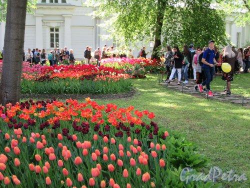 ЦПКиО. VI фестиваль тюльпанов в 2018 г. Общий вид газонов. фото май 2018 г.