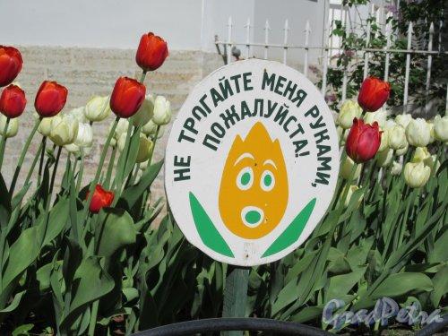 ЦПКиО. VI фестиваль тюльпанов в 2018 г. Предупредительный плакат. фото май 2018 г.