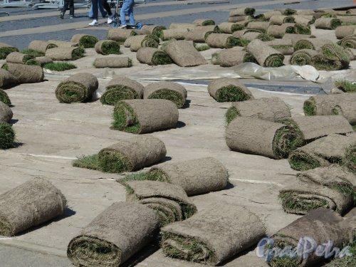 Дворцовая пл. Заготовка искусственного газона. Фото июнь 2015 г.