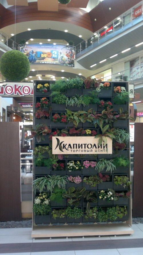 Коломяжский пр., дом 19. Tорговый центр «Капитолий» на Пионерской