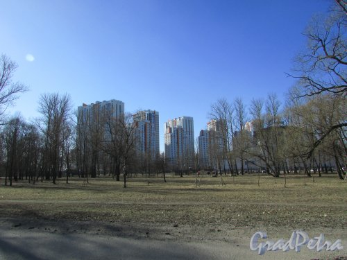 Дунайский проспект, дом 14, корпус 1, литера А. Общий вид на жилой комплекс «VIVA» со стороны Пулковского парка. Фото 22 марта 2016 года.