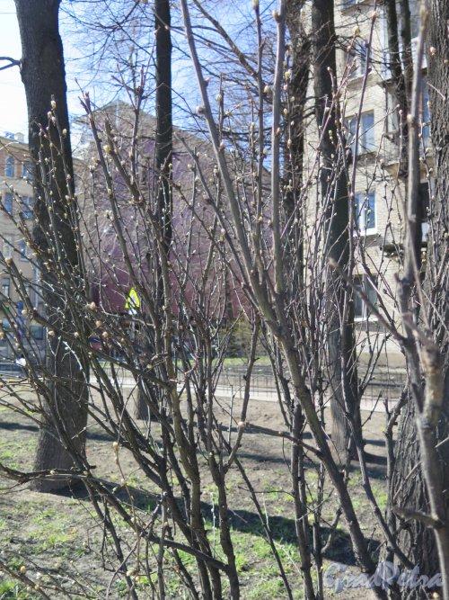 Чкаловский пр., д. 26. Жилой дом, Внутридомовой сквер. Фото апрель 2016 г.