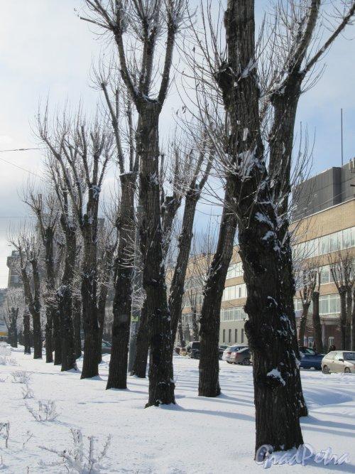 Проспект Стачек, д. 47. Бульвар на проспекте вдоль территории Кировского завода зимой. фото февраль 2018 г.