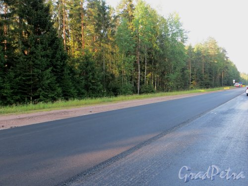 Укладка нового слоя асфальта на шоссе «Скандинавия». Участок от города Выборга до МАПП «Торфяновка». Фото 19 июля 2014 года.