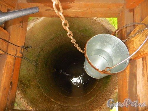 Качество воды в старом финском колодце за домом 129 в городе Каменногорске. Фото 26 сентября 2014 года.