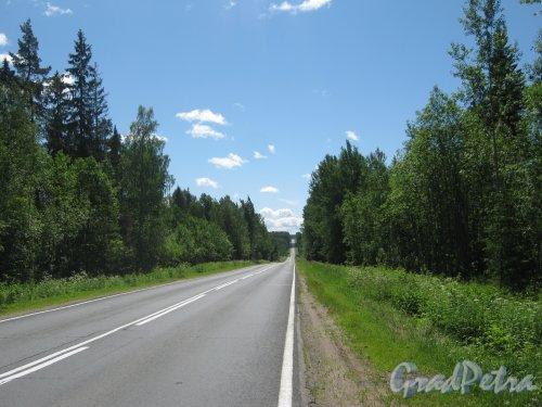 Лен. обл., Ломоносовский р-н, шоссе А-120. Фрагмент шоссе. Фото 28 июня 2012 г.