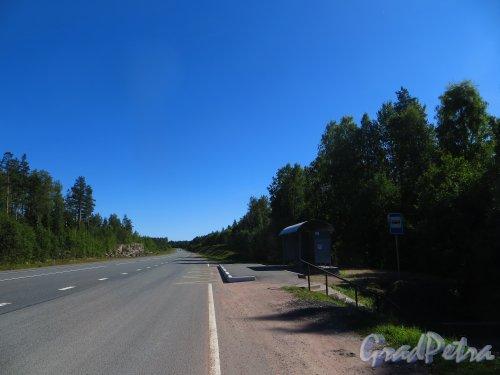 Трасса А-181 (Е-18 «Скандинавия»). Остановка СНТ «Большой Лог». Фото 17 августа 2015 года.