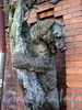 Ул. Достоевского, д. 44. Производственное и жилое здание фабрики К.Б.Зигеля. Бронзовая скульптура медведя. Фото июль 2009 г.