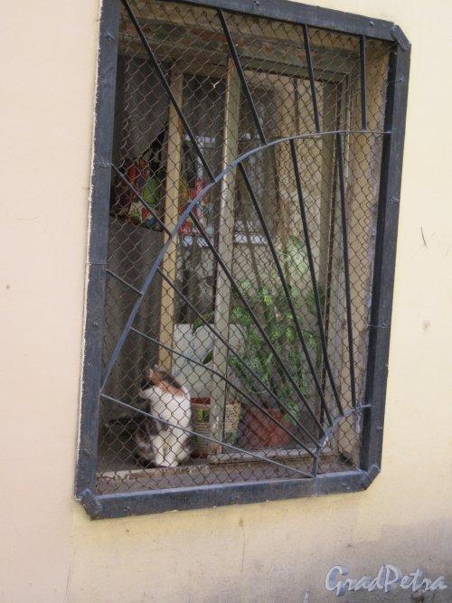 Фурштатская ул., д. 13. Доходный дом О. И. Лесковой. Двор. Окно 1-го этажа. фото июнь 2018 г.