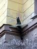 Памятник коту Елисею на доме 8 по Мал. Садовой улице. Фото июль 2004 г.