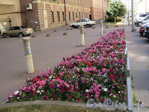 Клумба на газоне перед домами 37 и 39 по Захарьевской улице. Фото июль 2010 г.