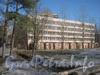 Ул. Лёни Голикова, дом 31, корпус 5. Вид от границы парка «Александрино». Фото март 2012 г.