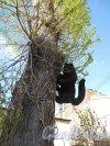 ул. Жуковского, д. 6. Доходный дом И. П. Струбинского. Двор. Садовая скульптура на дереве «Чёрный кот». Фото май 2011 г.