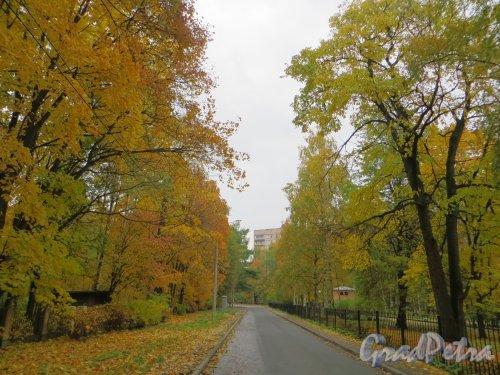 Перспектива Малой Объездной улицы в сторону Институтского проспекта. Фото 10 октября 2013 г.