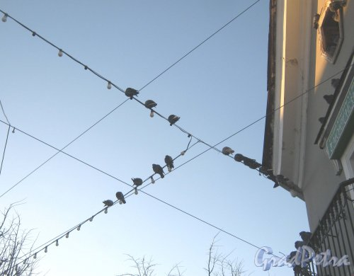Лен. обл., Гатчинский р-н, г. Гатчина, ул. Соборная, дом 2. Фрагмент здания (угол, выходящий на пересечение Красной и Соборной улиц). Голуби на проводах. Фото 29 ноября 2013 г.