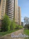Ул. Лёни Голикова, дом 29, корпус 7 и дорожка по границе парка «Александрино» в сторону пр. Ветеранов. Фото 10 мая 2015 г.
