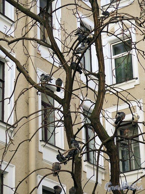 Бол. Зеленина ул., д. 28. Доходный дом герцога Н. Н. Лейхтенбергского. Фрагмент дворового фасада. фото апрель 2016 г.